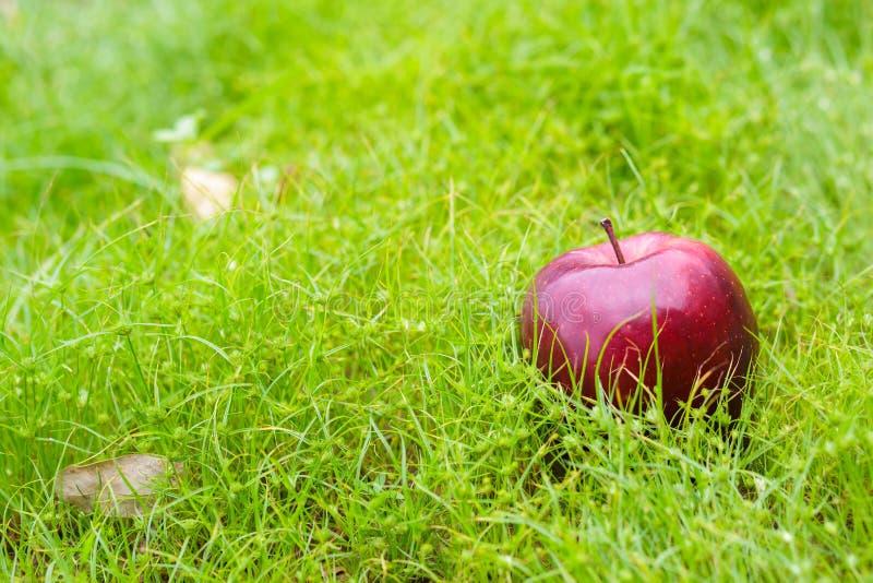 Una mela è sull'erba verde di mattina fotografia stock libera da diritti