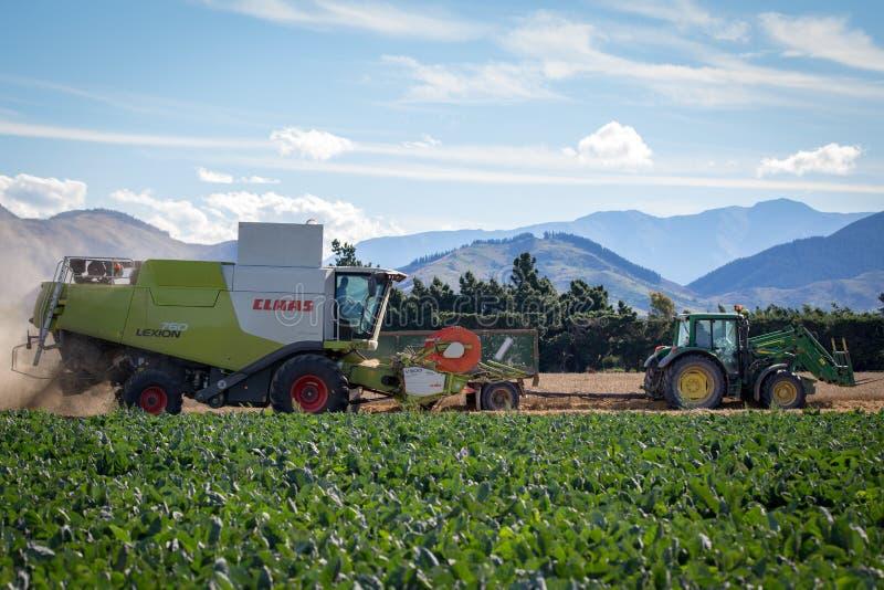 Una mietitrebbiatrice e un trattore lavorano ad un'azienda agricola che effettua il raccolto fotografia stock libera da diritti