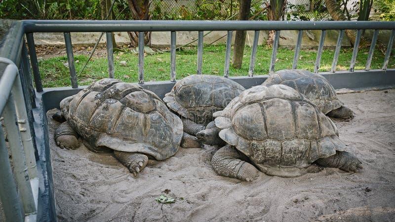 Una moltitudine delle tartarughe immagine stock libera da diritti