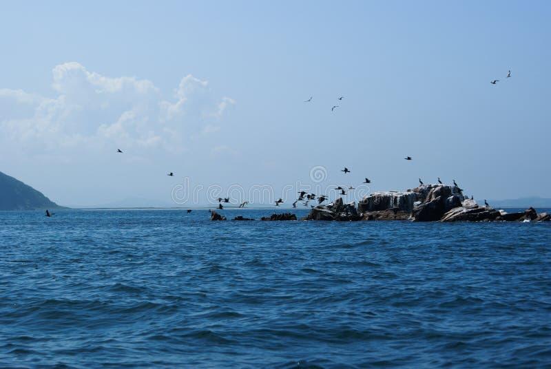 Una moltitudine di cormorani che decollano da una piccola isola Phalacrocorax Il Giappone del mare fotografie stock