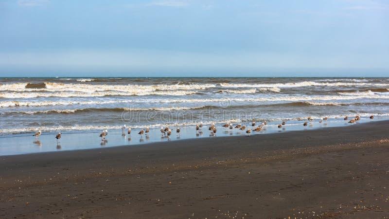 Una moltitudine di gabbiani dal mare fotografie stock