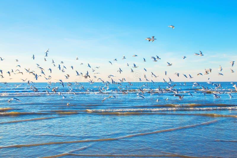 Una moltitudine di gabbiani sopra il mare fotografie stock libere da diritti
