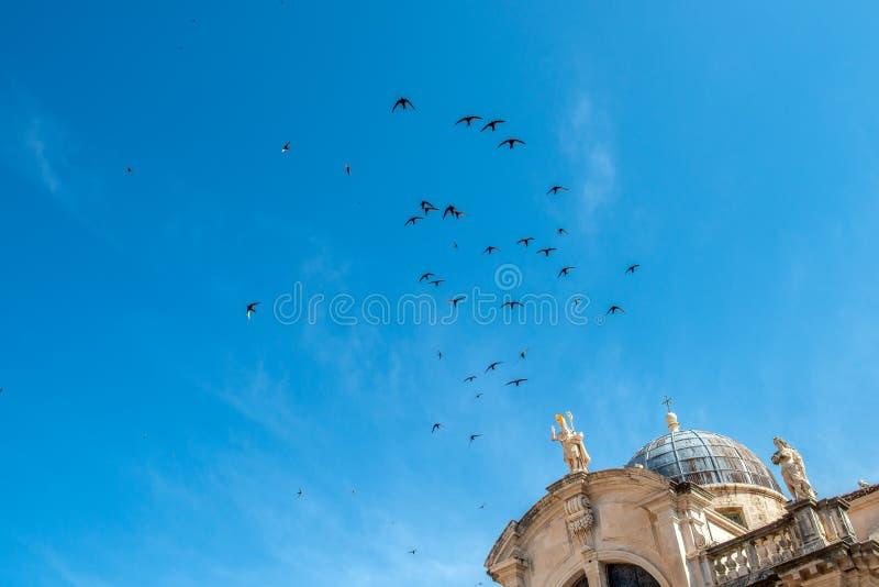Una moltitudine di sorsi neri sopra la cattedrale in Ragusa immagine stock libera da diritti