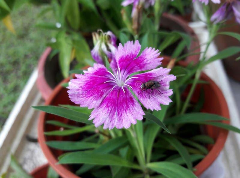 una mosca doméstica y una flor foto de archivo