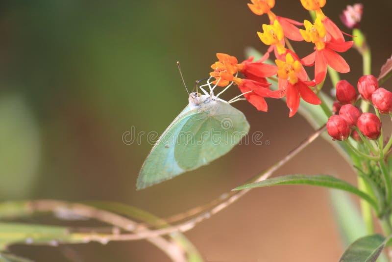 Una mosca y una flor foto de archivo