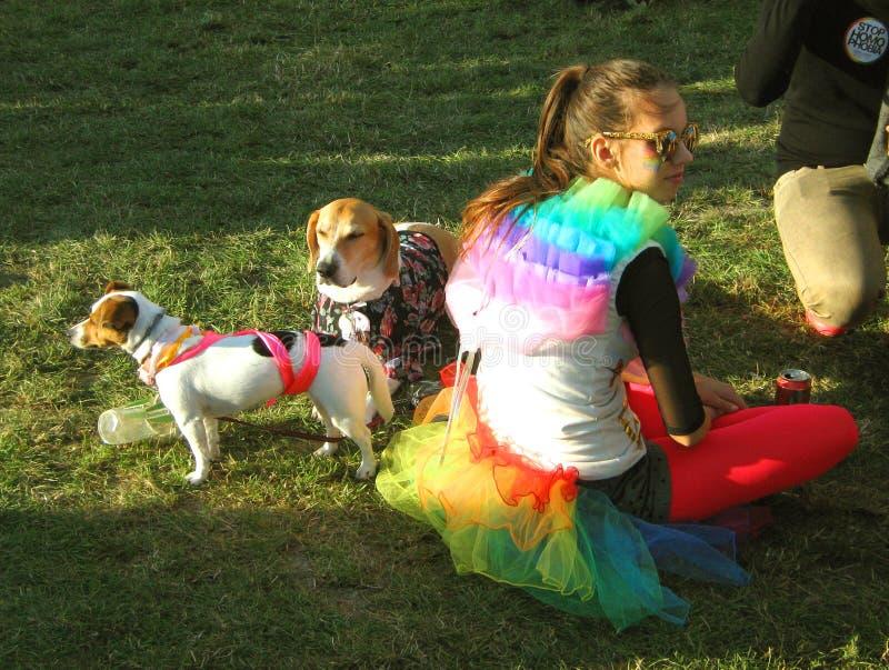 Una muchacha con los perros durante un partido del orgullo gay imagenes de archivo