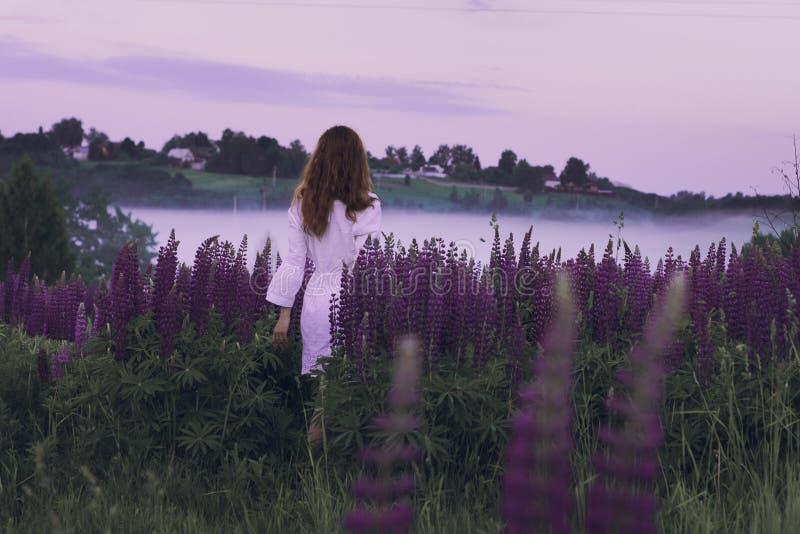 Una muchacha en la camisa blanca que sale en el campo de lupines púrpuras en el amanecer frío foto de archivo libre de regalías