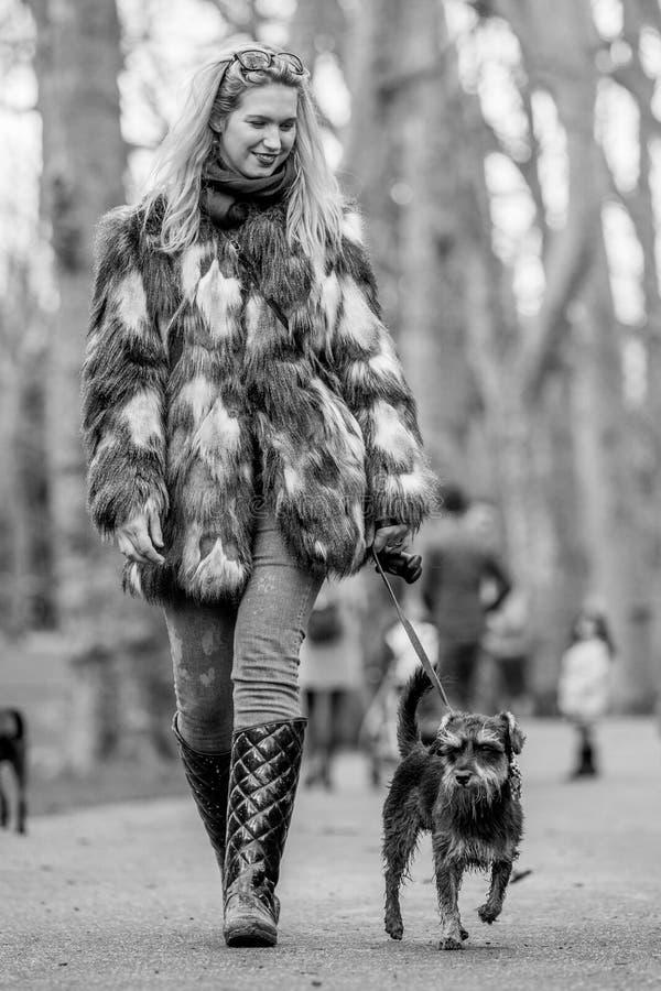 Una muchacha en un abrigo de pieles que camina su perro en el parque en una exposición canina fotos de archivo libres de regalías