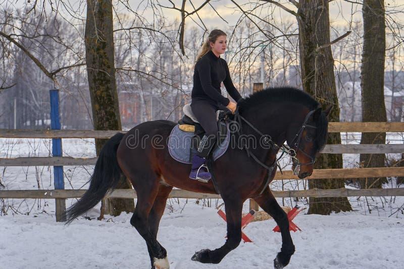 Una muchacha en un caballo salta galopes Una muchacha entrena a montar un caballo en un pequeño prado Un día de invierno nublado imagen de archivo