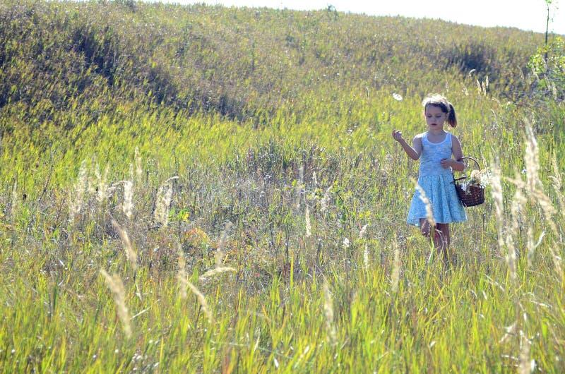 Una muchacha en un prado cubierto por el sol fotos de archivo