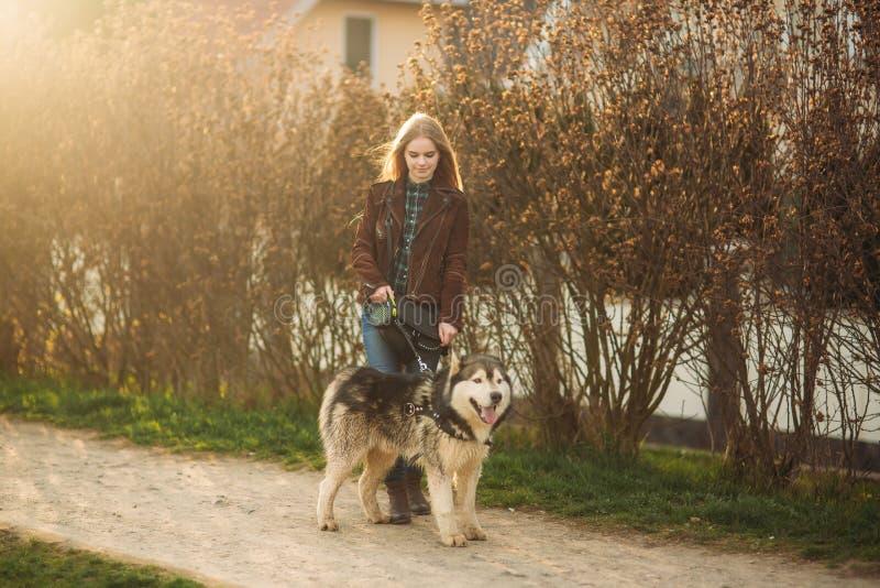 Una muchacha está caminando con un perro a lo largo del terraplén Perro fornido hermoso El río Primavera imagen de archivo