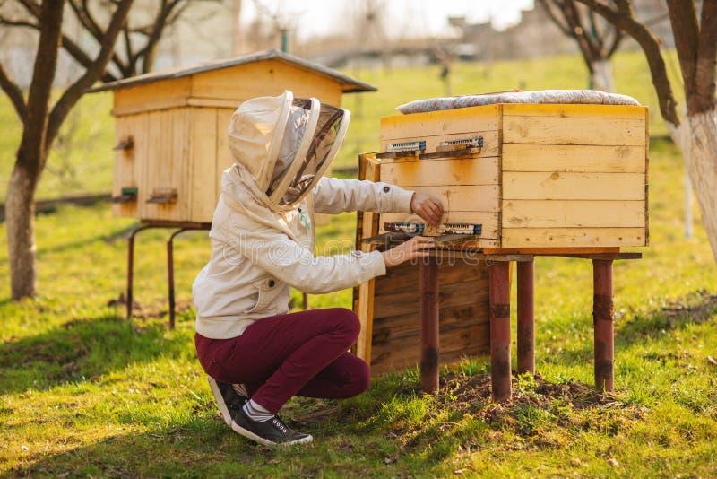 Una muchacha joven del apicultor está trabajando con las abejas y está examinando la colmena de la abeja después de invierno imagenes de archivo