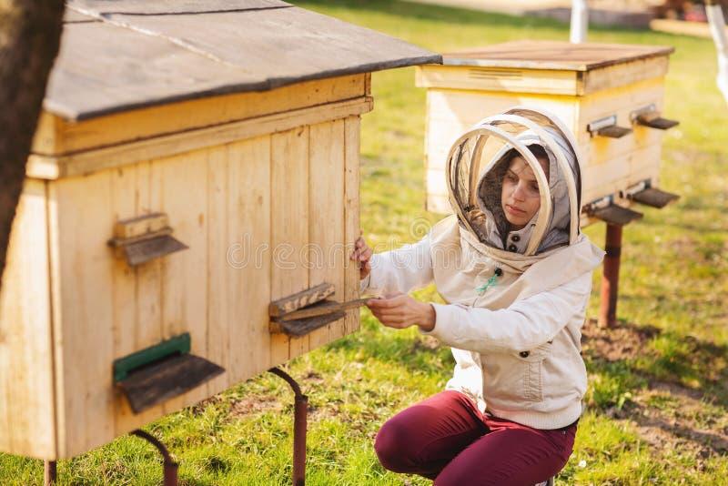 Una muchacha joven del apicultor está trabajando con las abejas y está examinando la colmena de la abeja después de invierno imagen de archivo