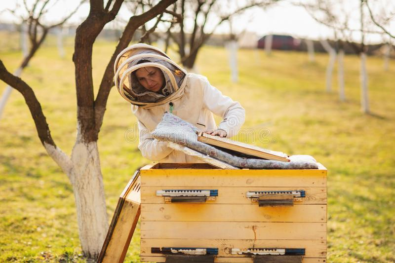 Una muchacha joven del apicultor est? trabajando con las abejas y las colmenas en el colmenar, el d?a de primavera fotografía de archivo