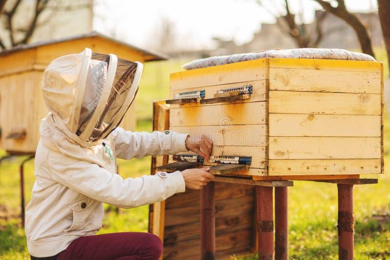 Una muchacha joven del apicultor est? trabajando con las abejas y las colmenas en el colmenar, el d?a de primavera foto de archivo libre de regalías