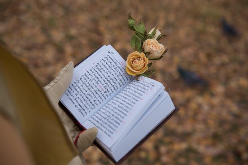 Una muchacha lee un libro en la caída foto de archivo