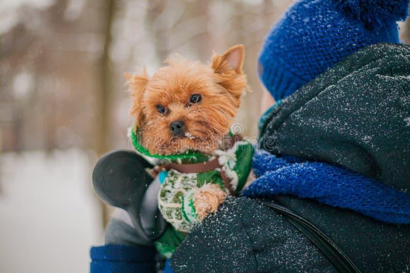 Una muchacha que camina un perro en un correo en un parque en el invierno en la nieve cuidado para un perro en la estación fría fotografía de archivo