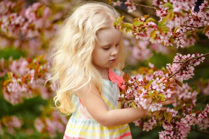 Una muchacha rubia linda mira los arbustos de la flor de cerezo adentro imagenes de archivo