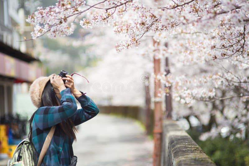 Una muchacha y Cherry Blossom imagen de archivo libre de regalías