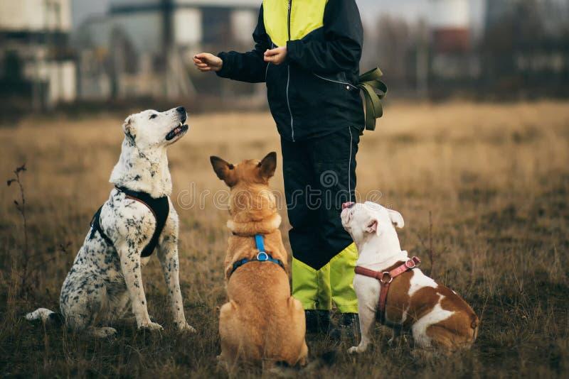 Una muchacha y tres perros que se sientan en el campo del otoño foto de archivo libre de regalías
