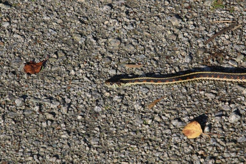 Una mudanza de la serpiente de liga imagenes de archivo