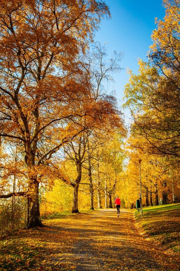 Una mujer atlética desconocida que corre en un parque del otoño en Finlandia imagen de archivo libre de regalías
