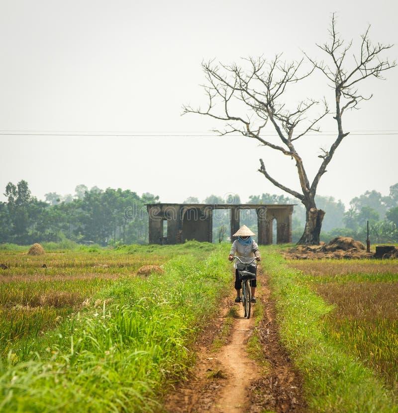Una mujer biking en el camino rural con el campo del arroz en Phu Tho, Vietnam foto de archivo libre de regalías