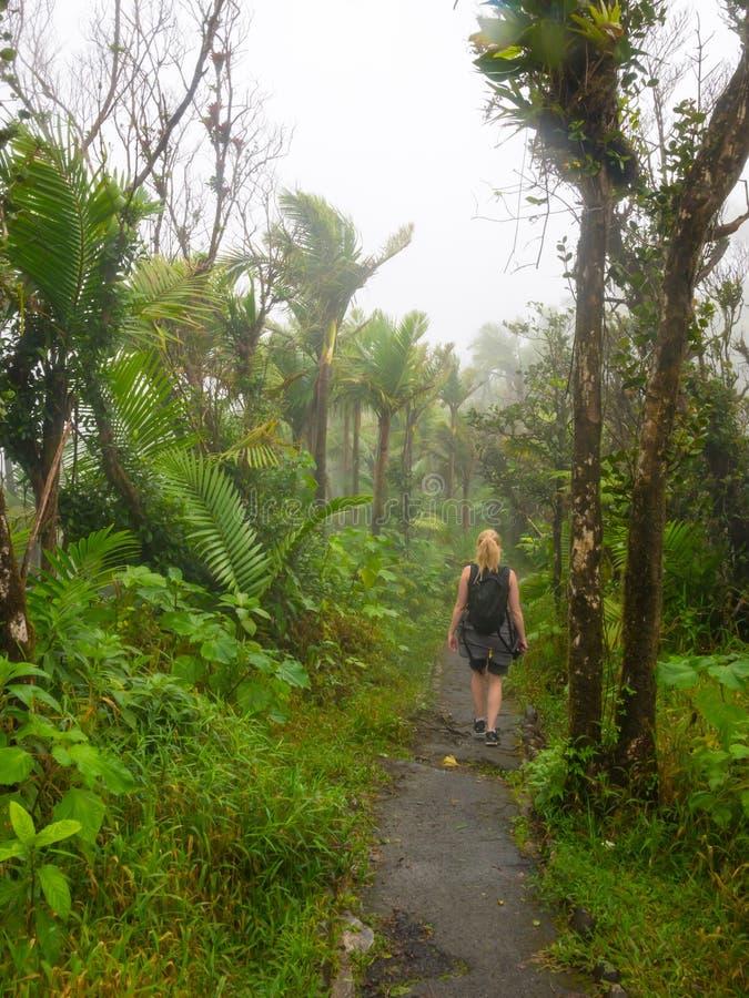 Una mujer caminando por un estrecho camino a través de El Yunque bosque tropical de Puerto Rico foto de archivo libre de regalías