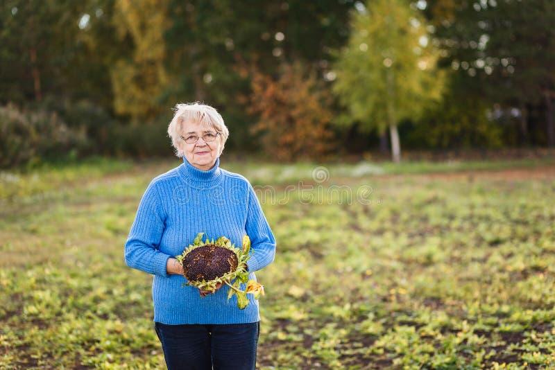 Una mujer canosa de setenta controles un girasol en sus manos y miradas en la cámara imagen de archivo
