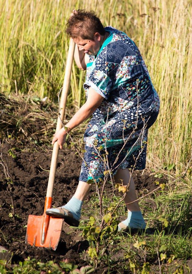 Una mujer cava un jardín con una pala fotografía de archivo libre de regalías
