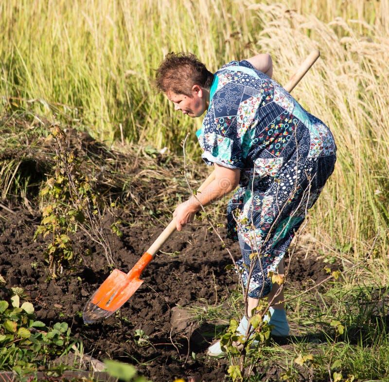 Una mujer cava un jardín con una pala foto de archivo libre de regalías