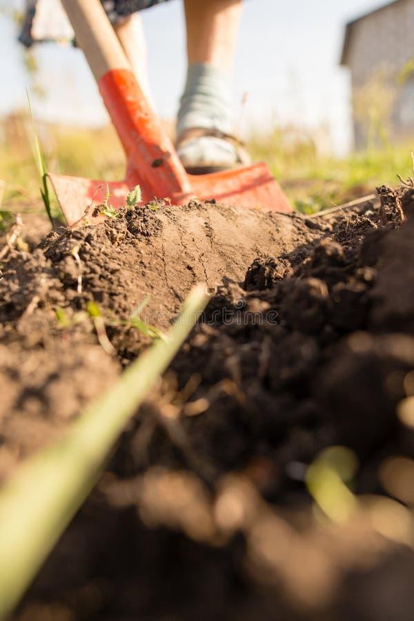 Una mujer cava un jardín con una pala imagen de archivo