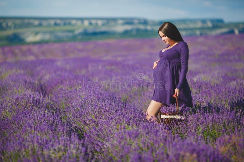 Una mujer embarazada está gozando de la lavanda del color foto de archivo libre de regalías
