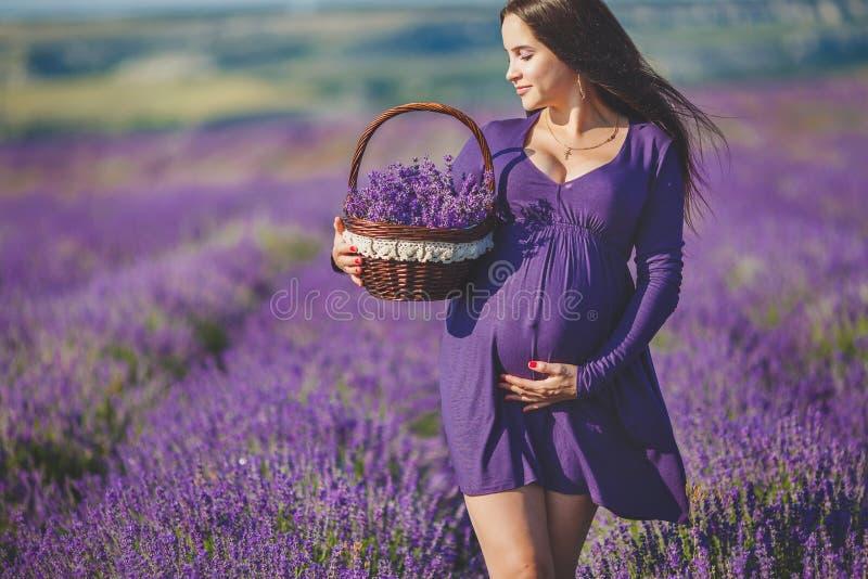 Una mujer embarazada está gozando de la lavanda del color imagenes de archivo