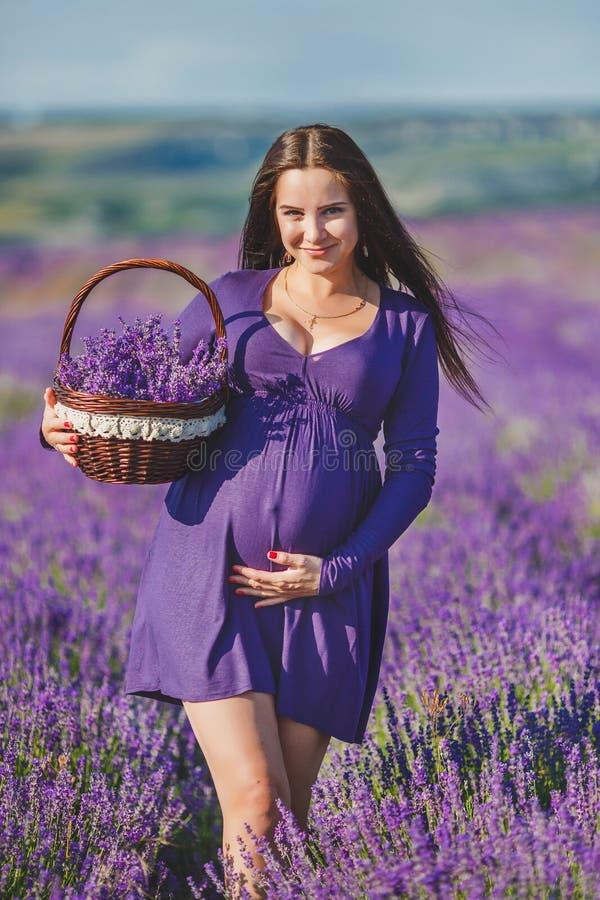 Una mujer embarazada está gozando de la lavanda del color imágenes de archivo libres de regalías