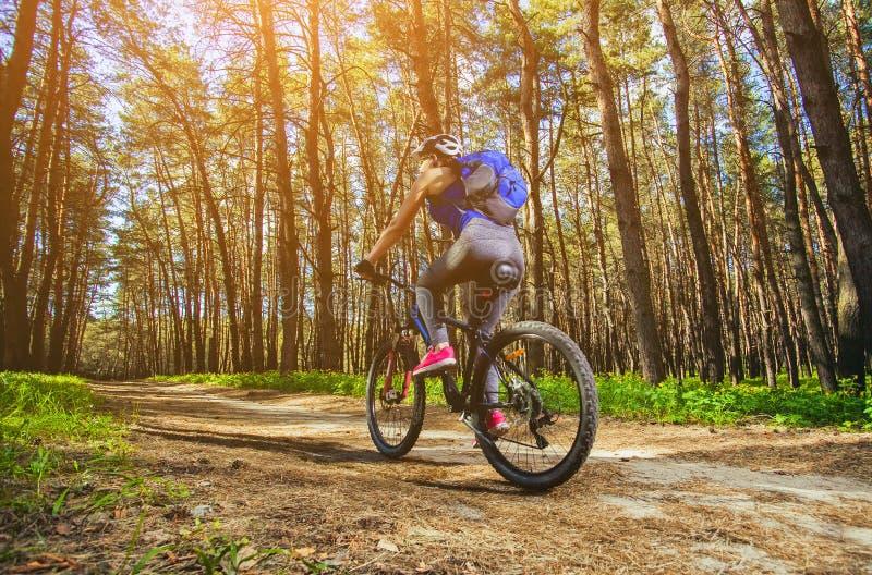 Una mujer joven - atleta en un casco que monta una bici de montaña fuera de la ciudad, en el camino en un bosque del pino foto de archivo