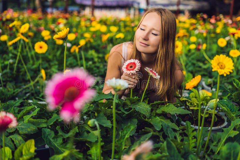 Una mujer joven en una granja del gerbera Cultivo de la flor en greenhous foto de archivo libre de regalías