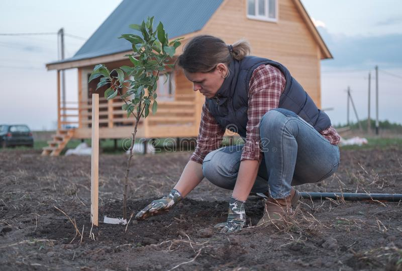 una mujer joven que planta un manzano en el jardín cerca de la casa foto de archivo