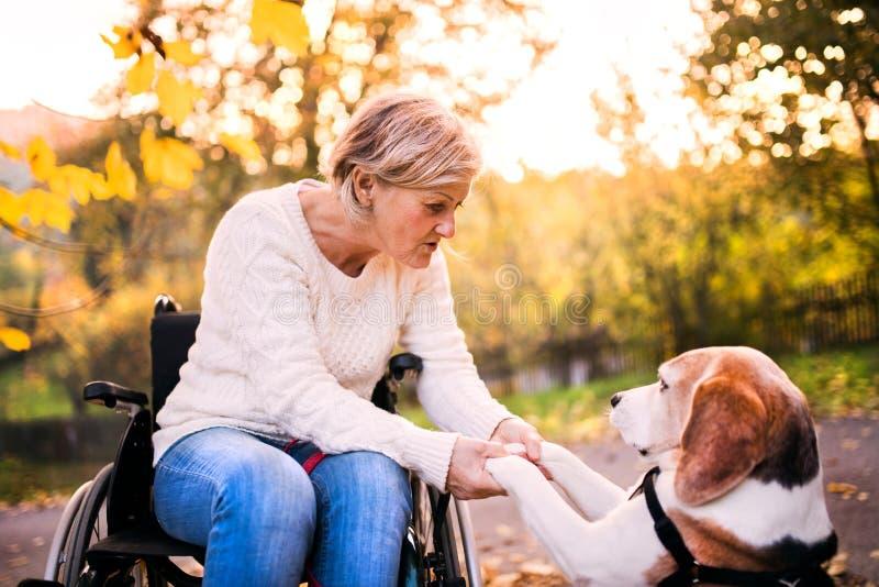 Una mujer mayor en silla de ruedas con el perro en naturaleza del otoño imagen de archivo