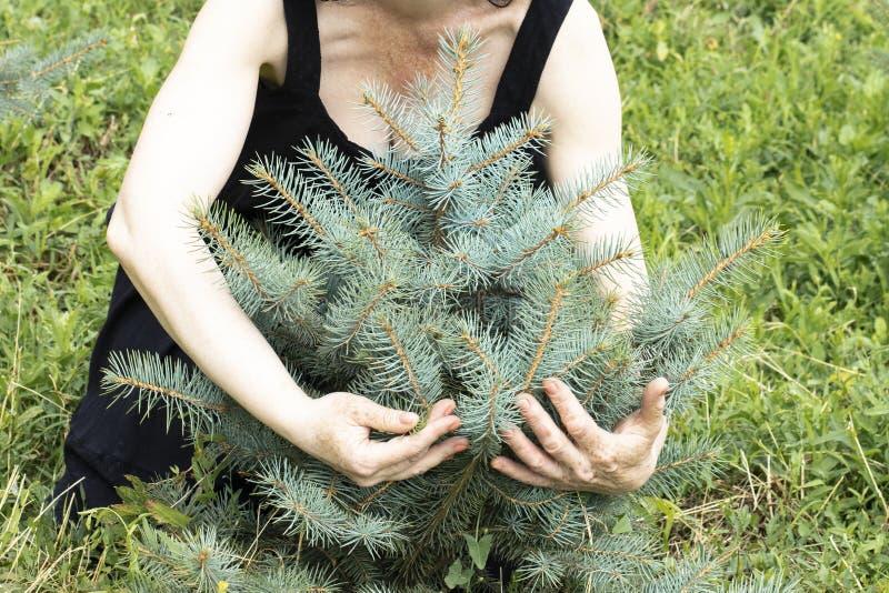 Una mujer mayor está sosteniendo un pequeño árbol de navidad azul fotografía de archivo