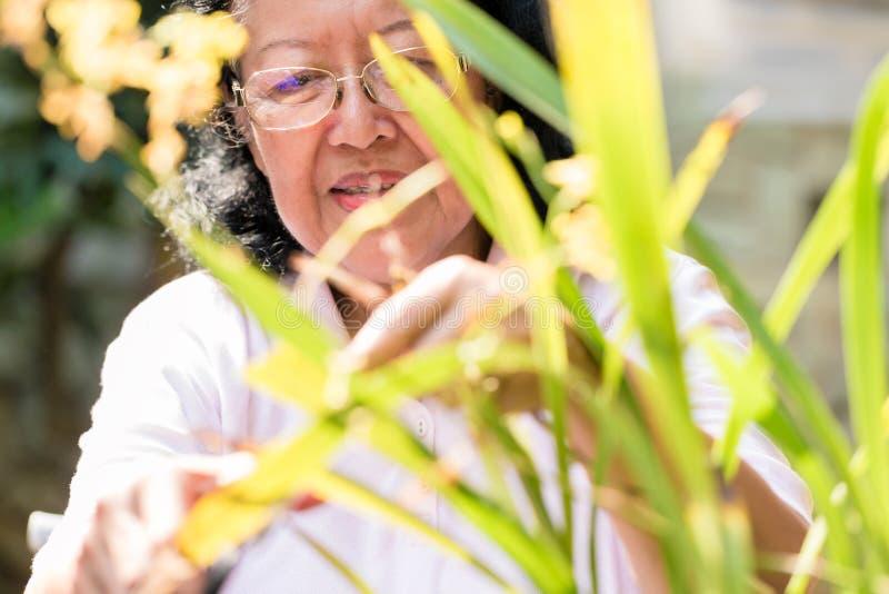 Una mujer mayor que mira las plantas foto de archivo