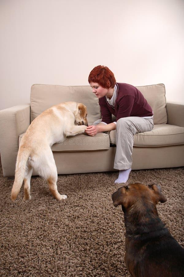 Una mujer y sus perros foto de archivo libre de regalías