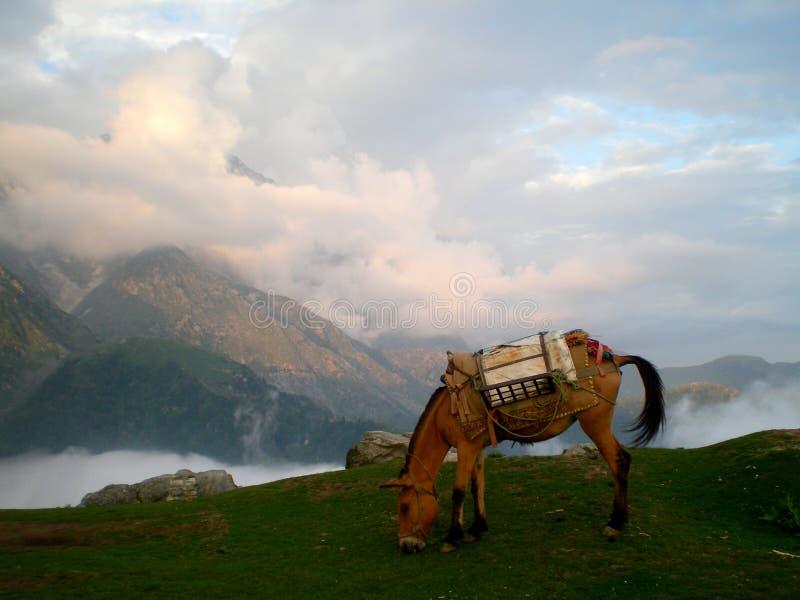 Una mula sobre las nubes foto de archivo libre de regalías