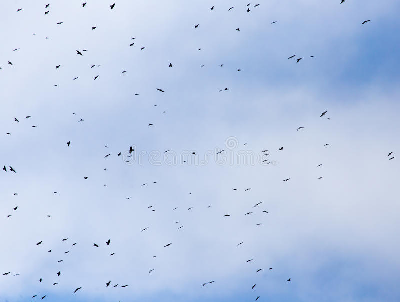 Una multitud de los pájaros del cuervo en un cielo azul imagen de archivo