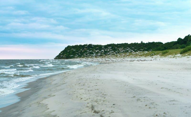Una multitud de pájaros en la costa fotos de archivo libres de regalías
