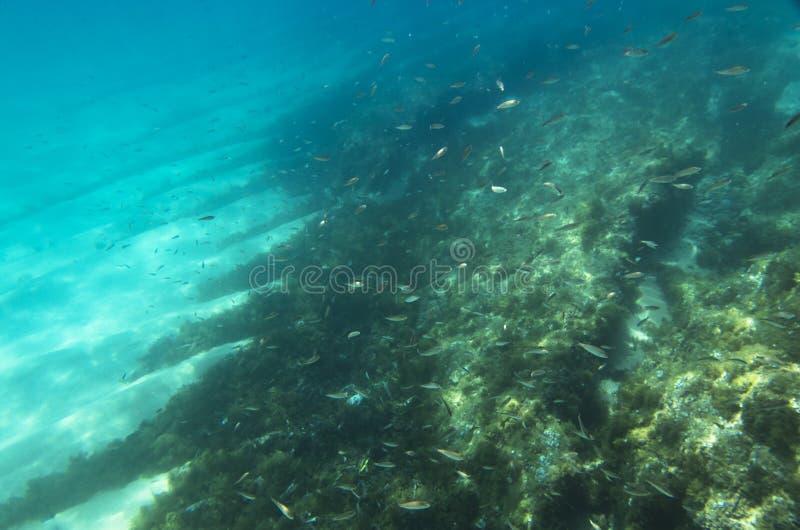 Una multitud de pequeños pescados imagen de archivo