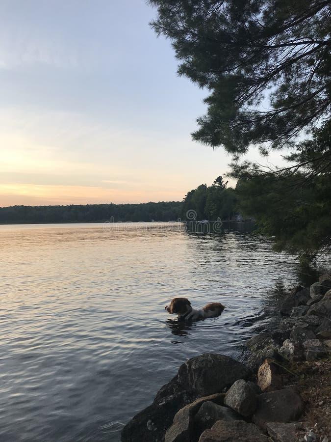 Una nadada de la puesta del sol foto de archivo libre de regalías