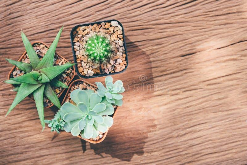 Una natura morta di tre piante del cactus su fondo di legno d'annata Tex immagini stock