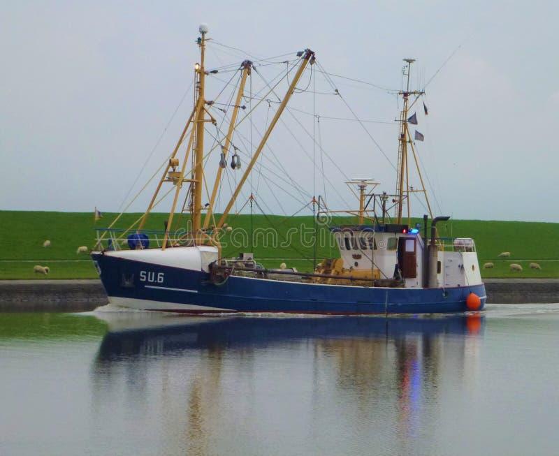 Una nave e un prato con le pecore immagini stock libere da diritti
