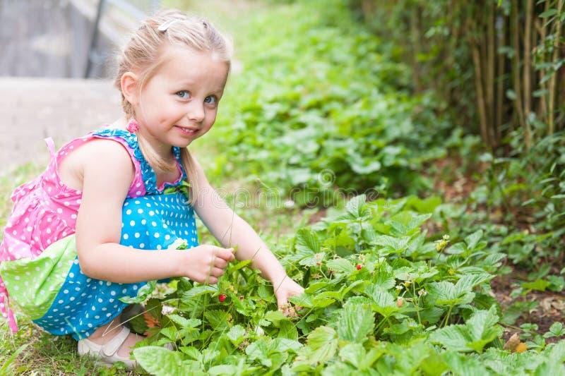 Una niña con las coletas en un vestido brillante que se sienta cerca de un arbusto de la fresa salvaje mirada de la cámara fotos de archivo